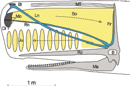 Marine Mammal Acoustic Behavior – Peter L. Tyack