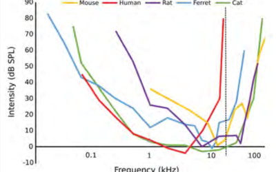 Ultrasonic Hearing in Cats and Other Terrestrial Mammals – M. Charlotte Kruger, Carina J. Sabourin, Alexandra T. Levine, and Stephen G. Lomber